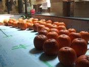 かぼちゃ搬入-07