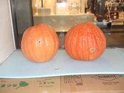 かぼちゃ搬入-08