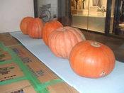 かぼちゃ搬入-10