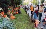 フォトギャラリー・芝生かぼちゃ